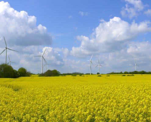 windenergie-in-raps