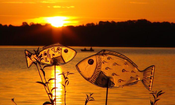 otto-photo-malente-kellersee glasfische