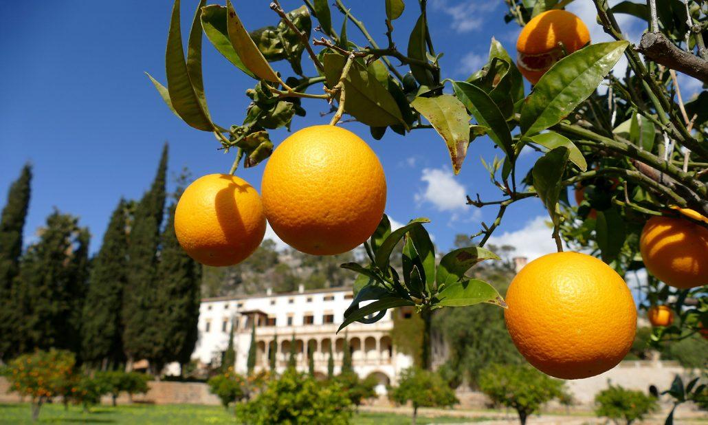 Orangen-Paixa