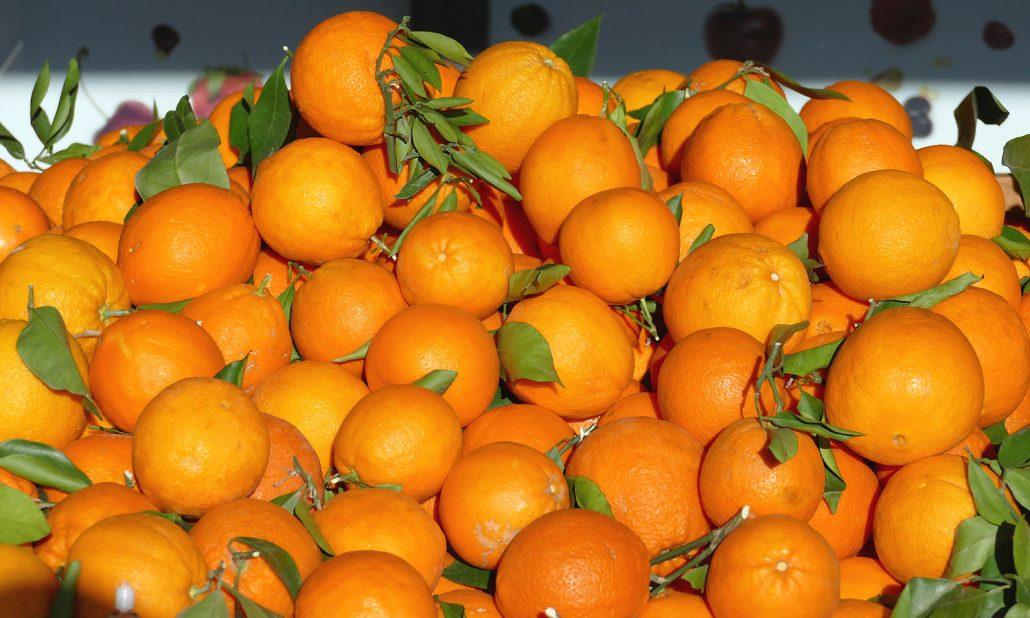 Mallorca-Orangenbluete