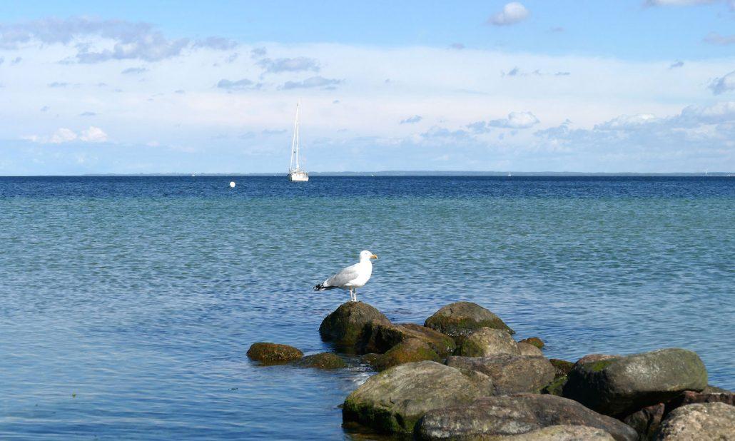 Ostsee-Moewe-Segelboot