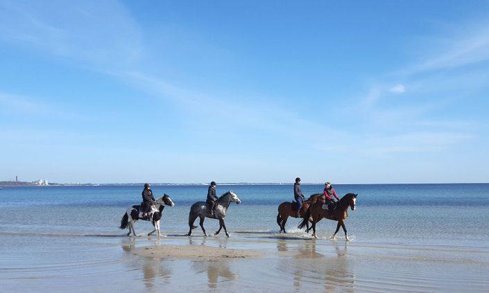 Ostsee-Pferde