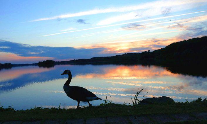 otto-photo Bad Malente Dieksee Sonnenuntergang Ente