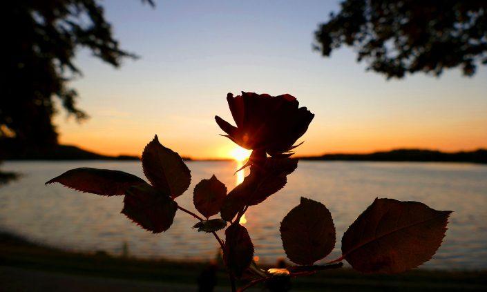 otto-photo Bad Malente Abendstimmung am Dieksee Seerose